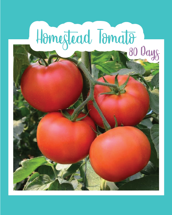 Homestead Tomato