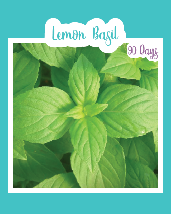 Lemon Basil