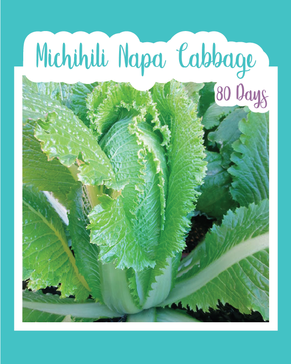 Michihili Napa Cabbage Seed Mail Seed Mail Seed Co