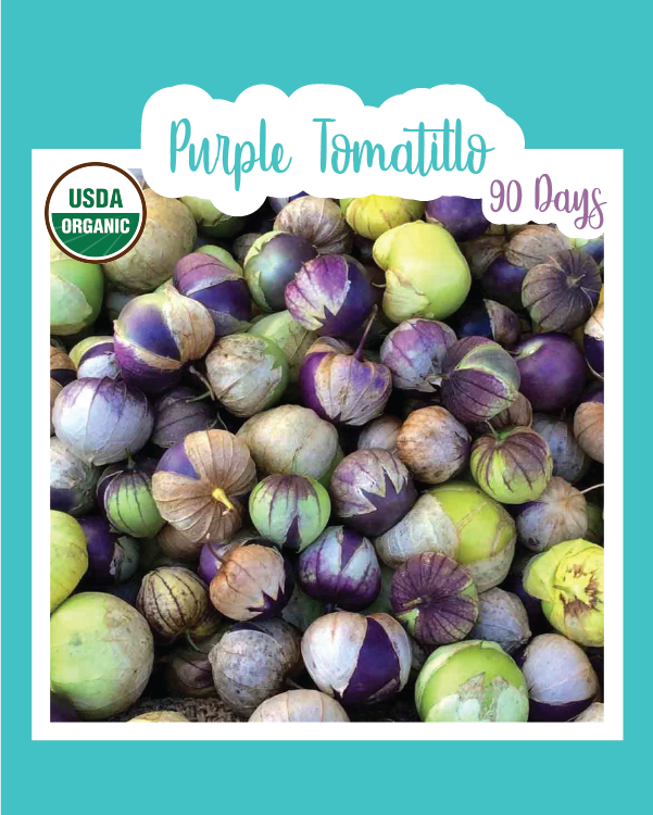 Purple Tomatillo (Organic)