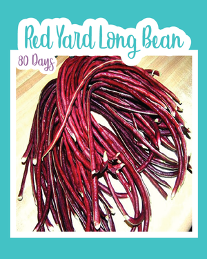 Red Yard Long Bean