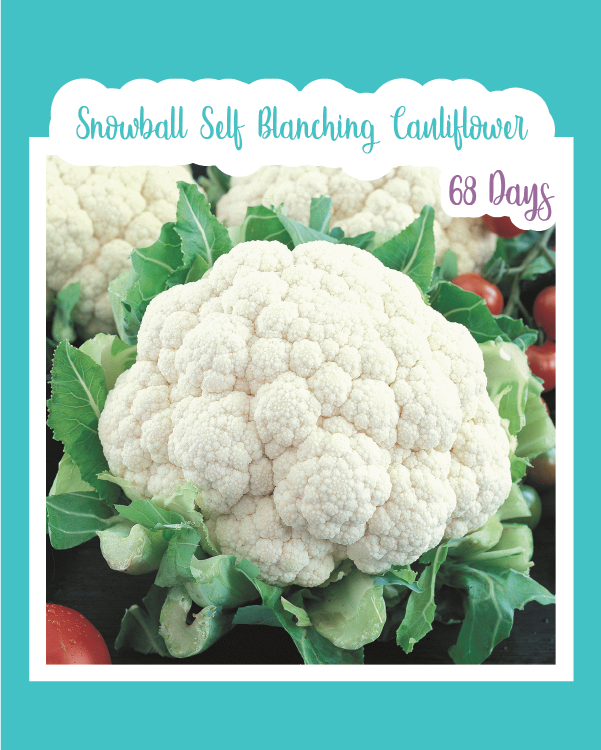Snowball Self Blanching Cauliflower
