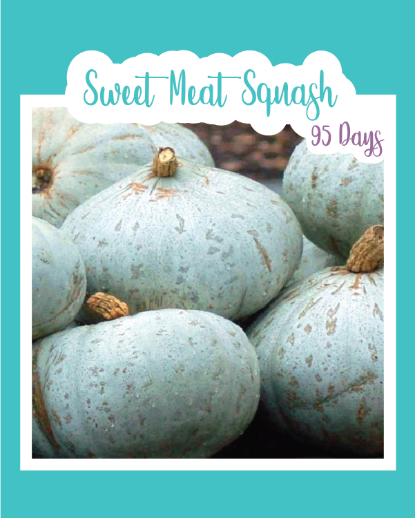Sweet Meat Winter Squash