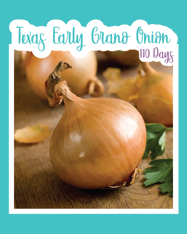 Texas Early Grano Onion