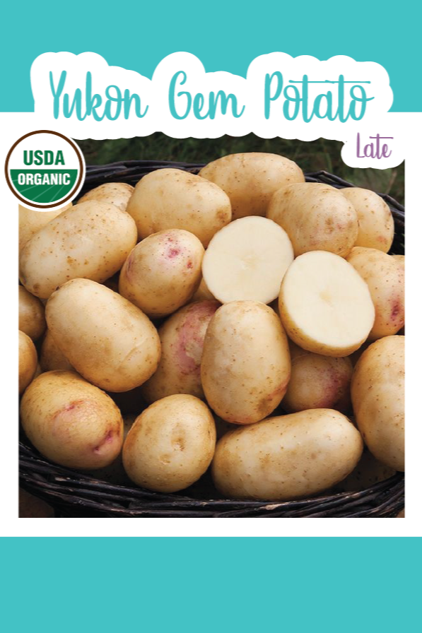 1 lb. Organic Yukon Gem Seed Potatoes (Late)