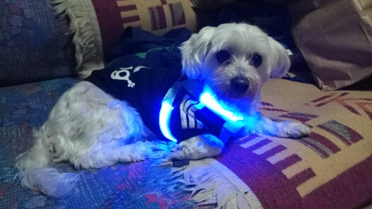 LED Nylon Lighted Dog Safety Harness