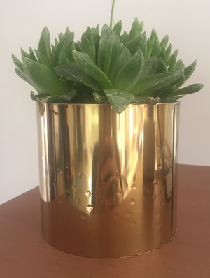 Gold Colour Planter with Plant