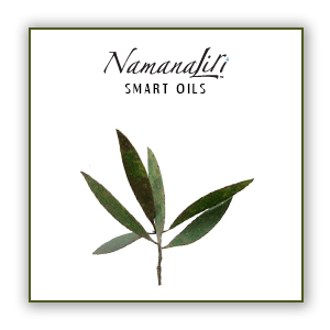 Niaouli Essential Oil Single (10ml)