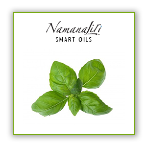 Basil, Sweet Essential Oil Single (10ml)