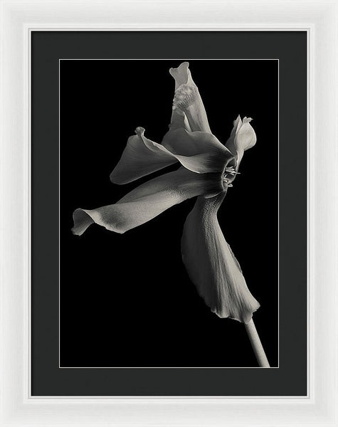 Cyclamen #6 - Framed Print