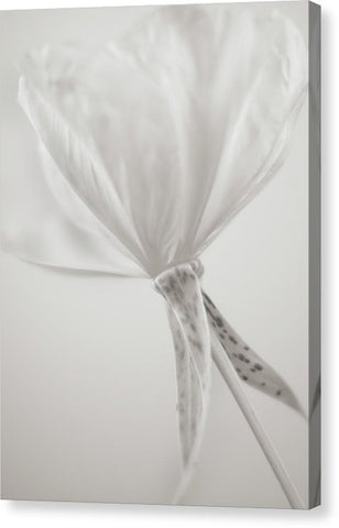 Evening Primrose #1 - Canvas Print