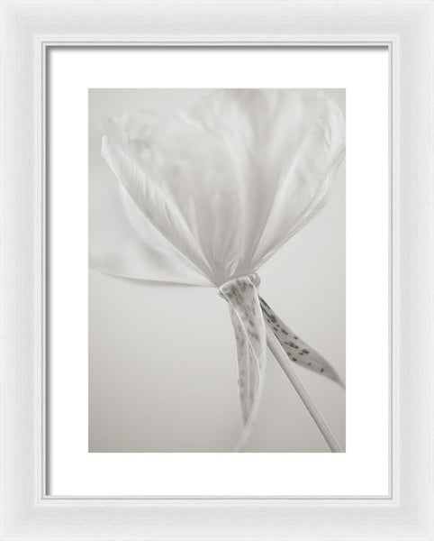 Evening Primrose #1 - Framed Print