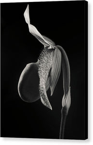 Lady Slipper Orchid #2 - Canvas Print