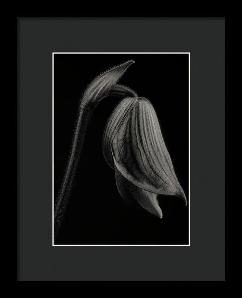 Lady Slipper Orchid #4 - Framed Print