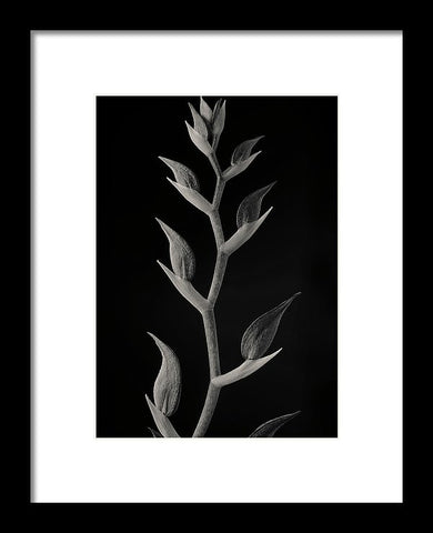 Orchid Buds - Framed Print
