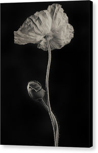 Poppies #1 - Canvas Print