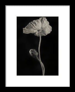 Poppies #1 - Framed Print