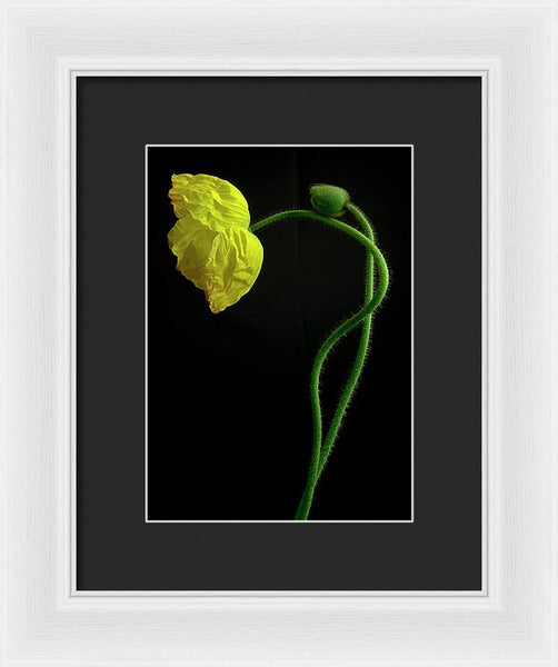 Poppies #6 - Framed Print