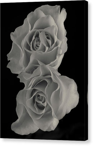 Roses #1 - Canvas Print