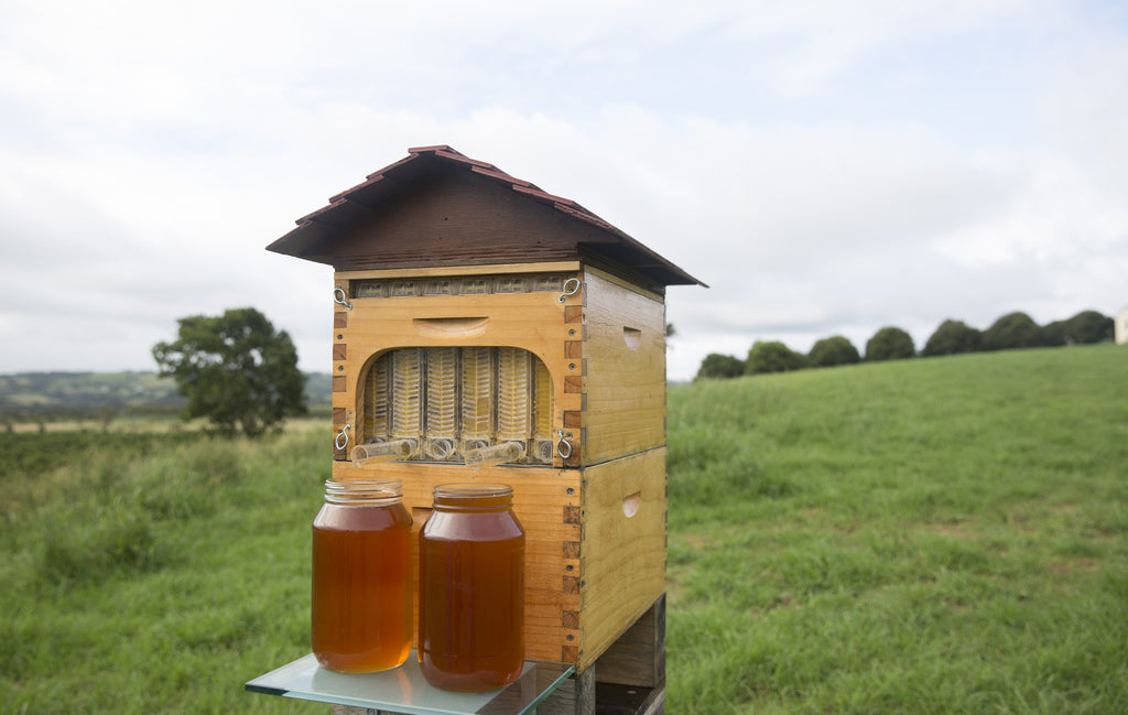 Honey on Tap