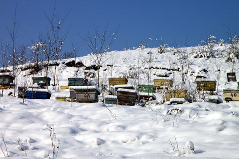 Bienenstock im Winter