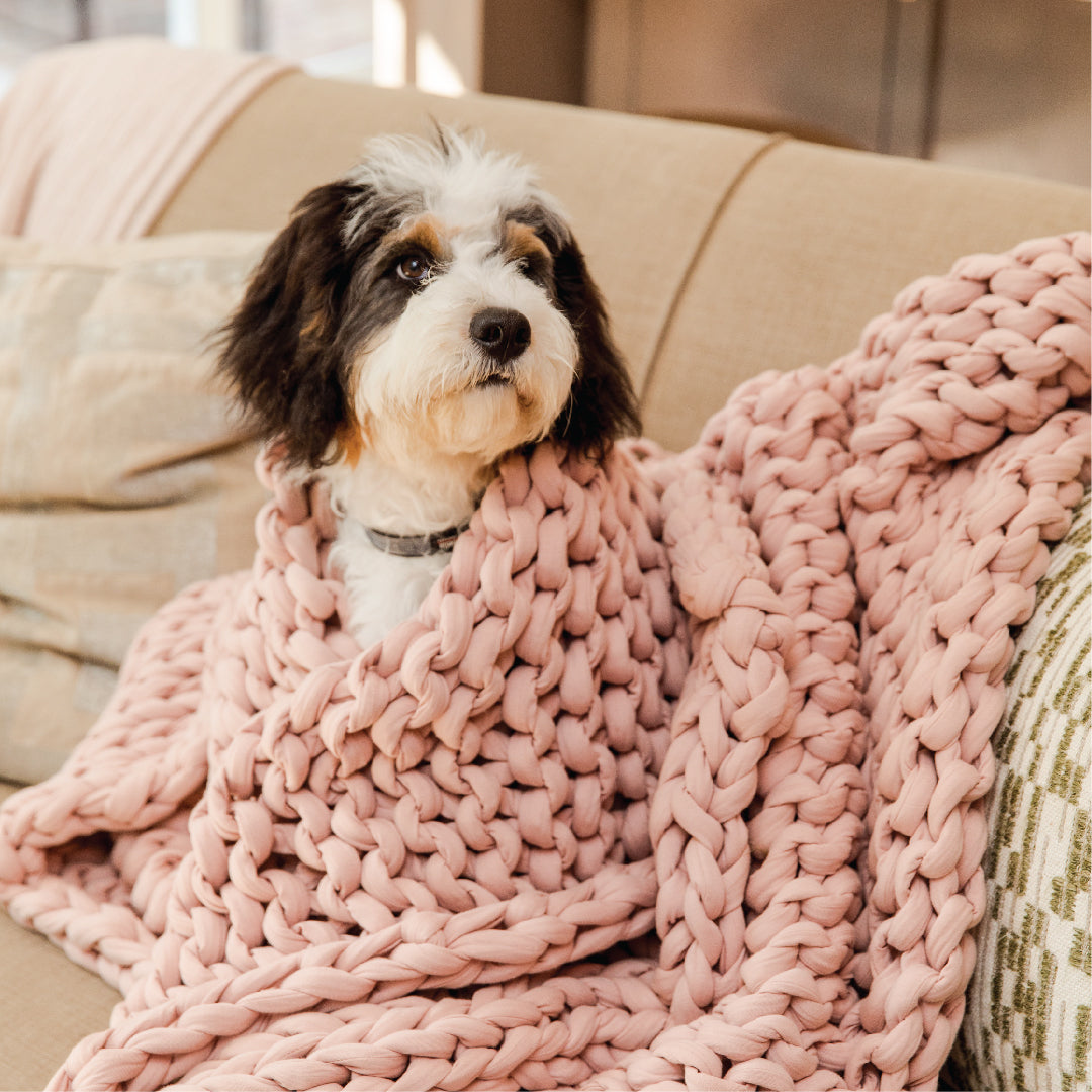 Bearaby Blog - Weighted Blankets & Anxiety In Dogs: A Vet's Opinion