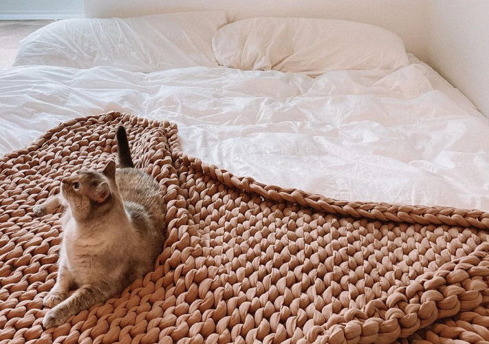 cat on bed and blanket