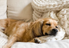 weighted blanket benefits for pets