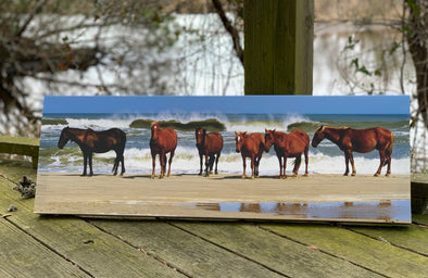 "Outer Banks Gifts Blog features ""Fierce and Free, The Wild Horses of the Outer Banks 