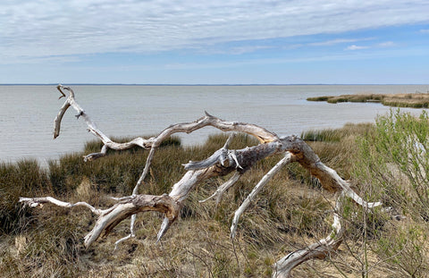 Awaiting Spring on the Currituck Sound in Duck North Carolina