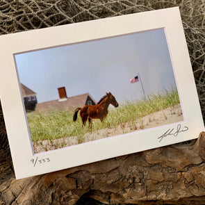 Patriotic Pony, John Sams Photography© at Beach Treasures in Duck