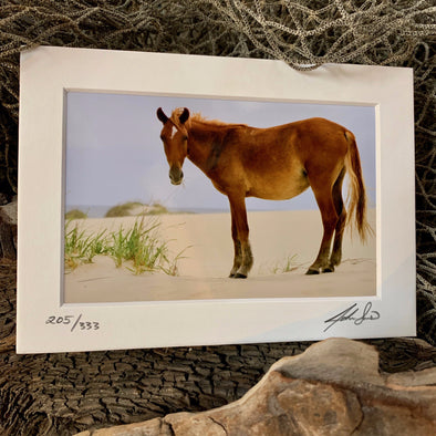 Dune Pony, John Sams Photography© at Beach Treasures in Duck