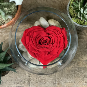 Large Heart-Shaped Rose in Glass Vase
