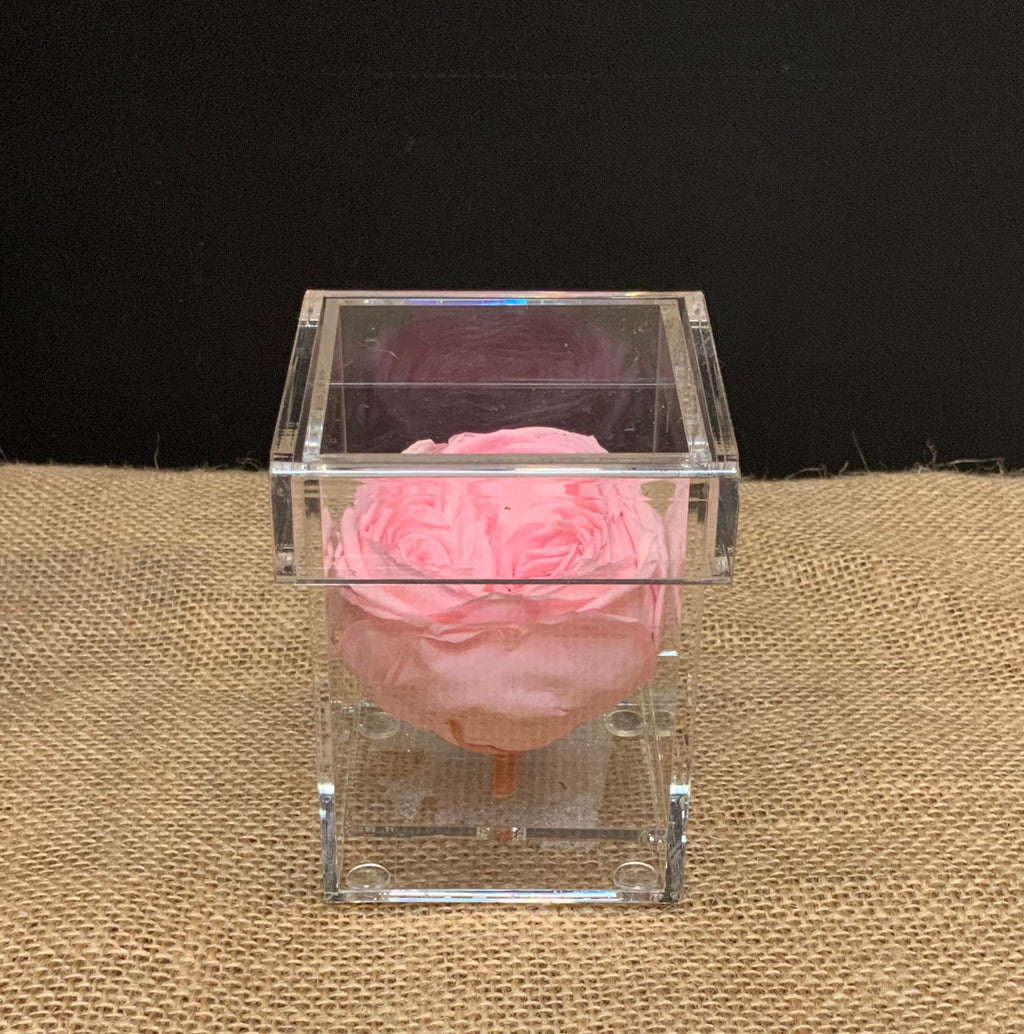 Single Pink Rose in Acrylic Keepsake Box