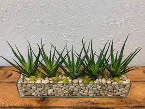 "Succulent Planter/ (5) 4"" plants in 24""x 4"" glass rectangle"