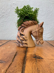Selaginella in ceramic horse