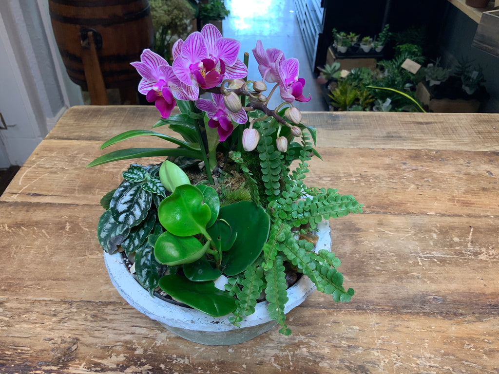 Mixed Planter with Miniature Orchids