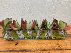 "Succulent Planter/selection in 24""x 4"" glass"