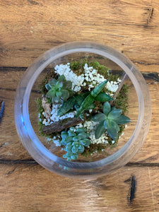 Succulent Planter/mixed in clear bowl terrarium