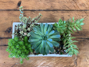 Succulent Planter/mixed in low rectangular ceramic