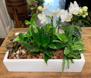 Mixed Planter in Rectangular Ceramic
