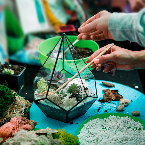 Build a Terrarium - CultureForce