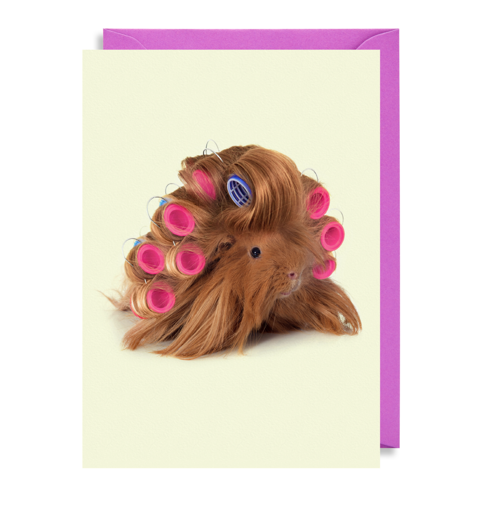 Curly Guinea Pig Greetings Card