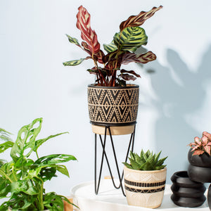 Sgraffito Plant Pot