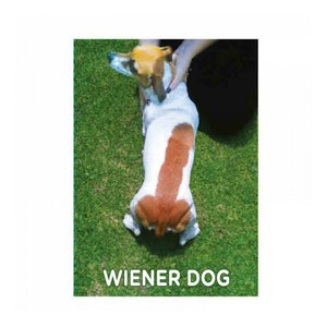 Wiener Dog Fridge Magnet