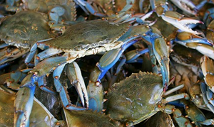 5 Things You Didn't Know About Blue Crab