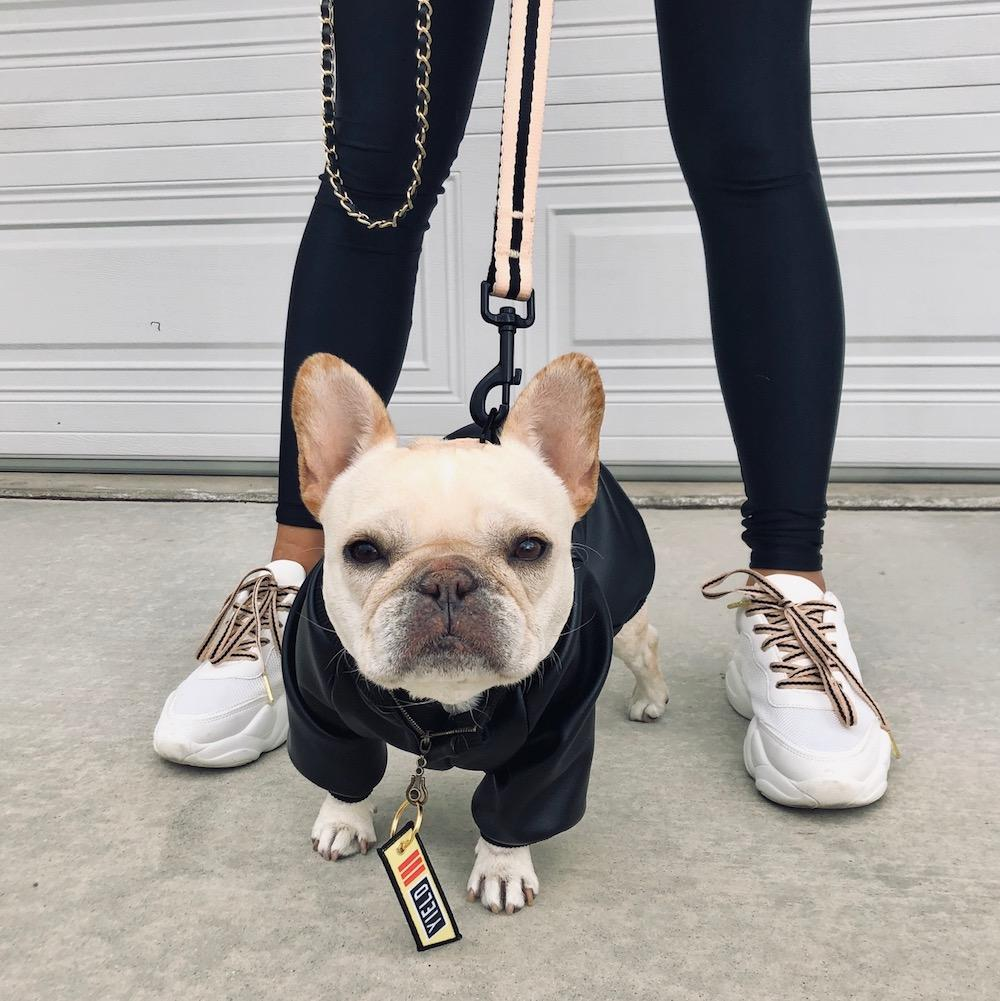 french bulldog leather jacket