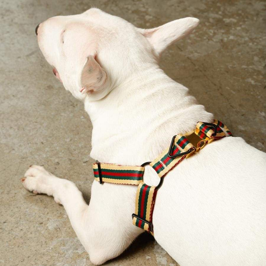 dog comfortable harness