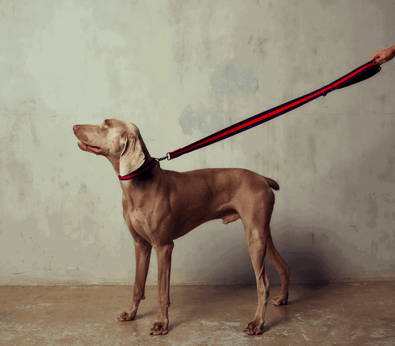 The City Dog Leash Padded