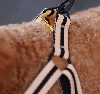 harnesses for city dogs